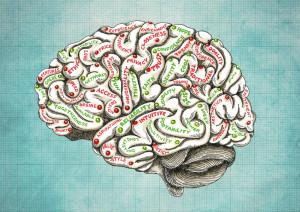 Brain - RenewYourMind.co.nz